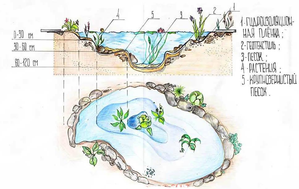 Схема пруда