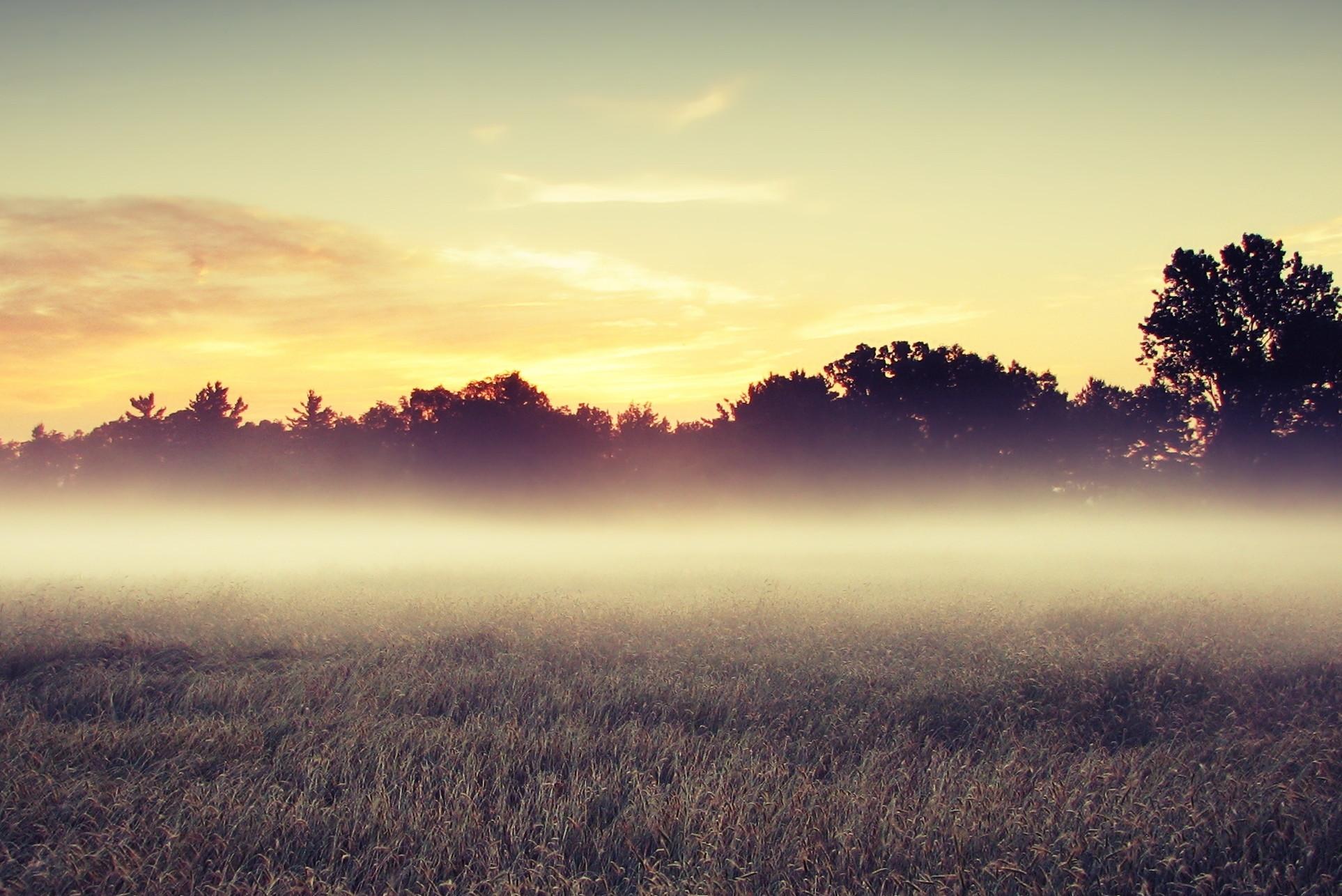 Туман на участке