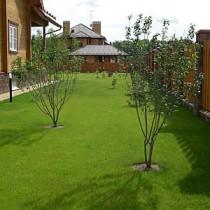 Посадка газонной травы своими руками на даче