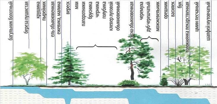 Зависимость растений от воды